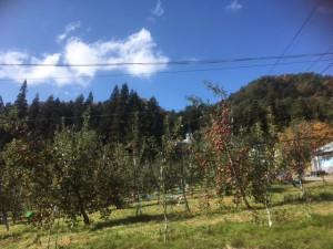 彩リンゴ狩り写真1
